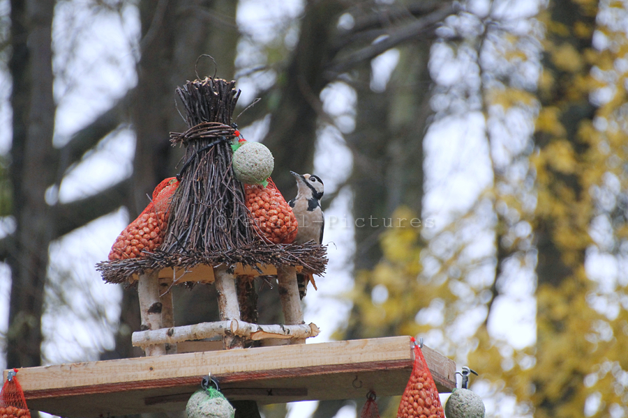 Bonte Specht JenT 29-11-2013 (2)