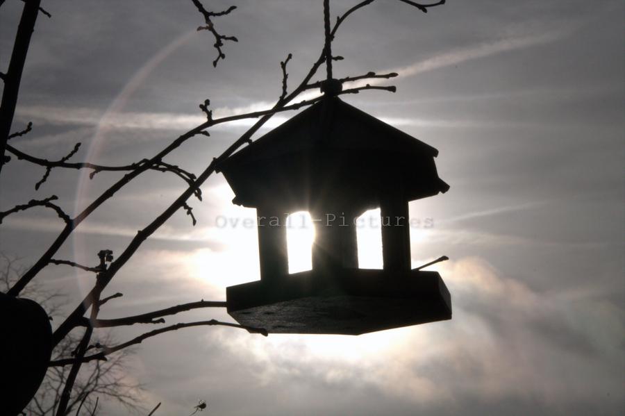 Zon gevangen vogelhuisje