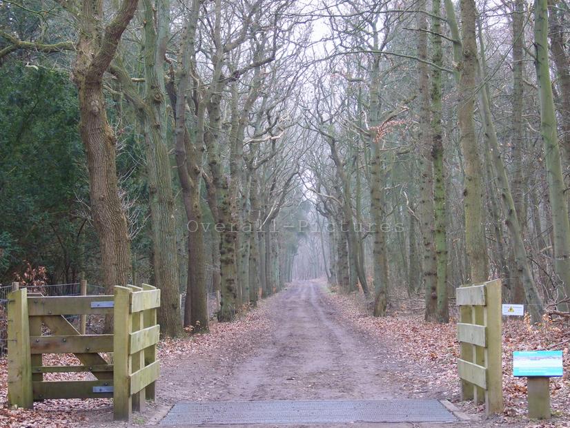Duinen Heemskerk Castricum (98)-BorderMaker