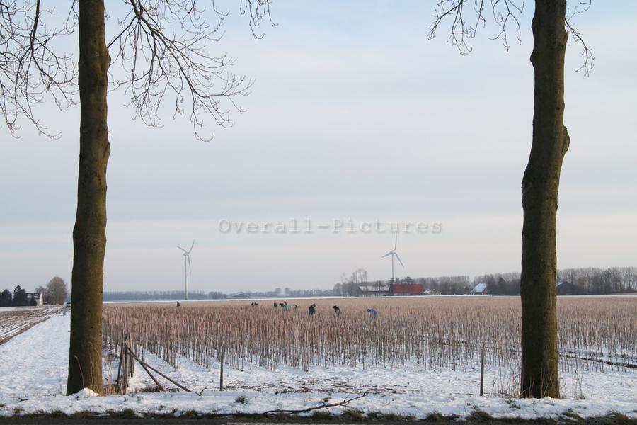 Landbouw Biddinghuizen winter1-BorderMaker